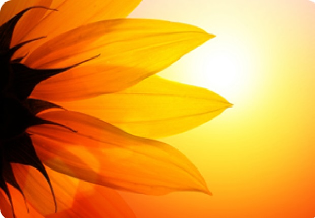 summer solstice celebration vancouver wedding celebrations