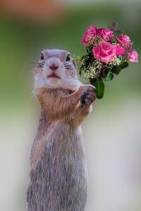 squirell-roses-1278642_640