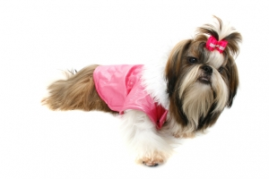 dog-1-1184414-639x426